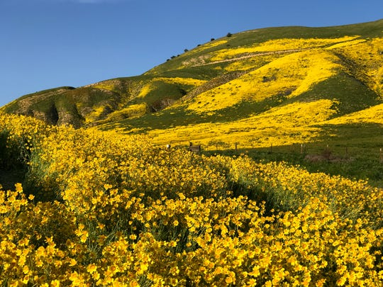 A 'superbloom' of spring wildflowers blankets Carrizo