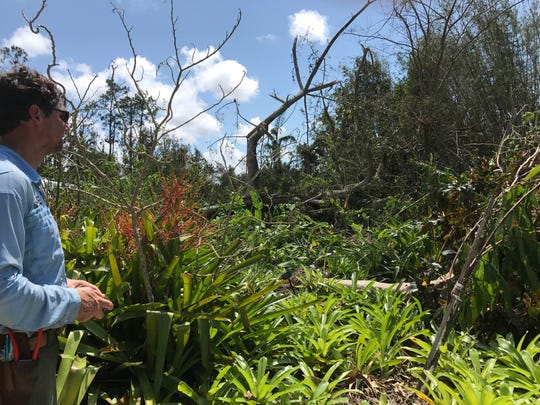 Brian Galligan, director of horticulture at Naples Botanical Garden, inspects a downed tree after Hurricane Irma on Tuesday, Sept. 12, 2017.