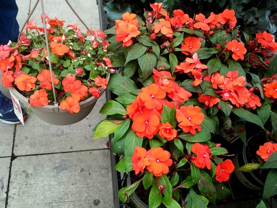 Plants for your porch and patio that you (almost) can't kill include Impatiens, which come in a variety of colors.