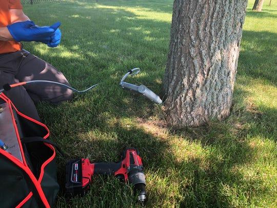 Sam Kezar injects  emamectin benzoate into a nash tree