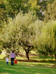 Children  enjoy the experience of apple picking at