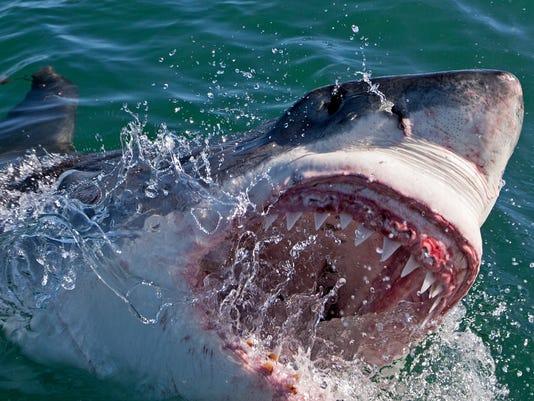 Shark Week PlanEnt_001