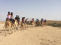A group of Jewish UCF students spend the morning riding camels in the Negev Desert while on the 10-day trip Birthright.
