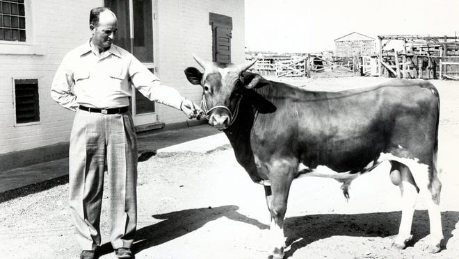"A photo from June 25, 1950: ""Wesean's Norbeau's Waldo, a young bull from the Western Consumers' Guernsey Dairy Herd, has been purchased for $600 by Price's El Paso Dairy and is here being held by Stanley Ridge, dairy manager. The bull will be used for artificial insemination of Price's and associated dairy herds."""