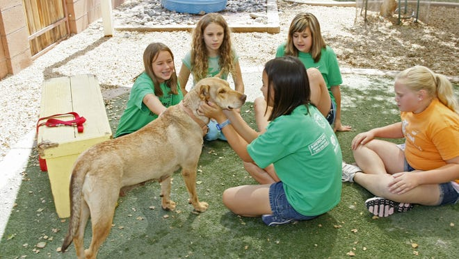 Opportunities for feeling fur are available for kids ages 9-17 who love animals. Junior Volunteer Days sessions are held on four Sundays from September to December. From 9 a.m. to 1 p.m., kids will work with a professional educator to complete day-to-day activities. Among them are cleaning dog kennels and cat condos, socializing shelter animals and making enrichment treats for exotics.  Details: 30 N. 40th Place, Phoenix. $30 per session. 602-273-6852, ext. 121, aawl.org.