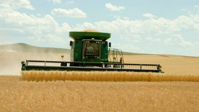 Kansas ranks 1st in the country for winter wheat production according to recent reports from the United States Department of Agriculture. Thank you Sunflower State farmers!