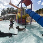 Hundreds celebrated Labor Day and the end of summer in 2014 by bringing their dogs to the Pooch Plunge at Fort Collins City Park Pool.