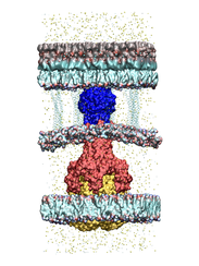A rendering of proteins that assemble to create an
