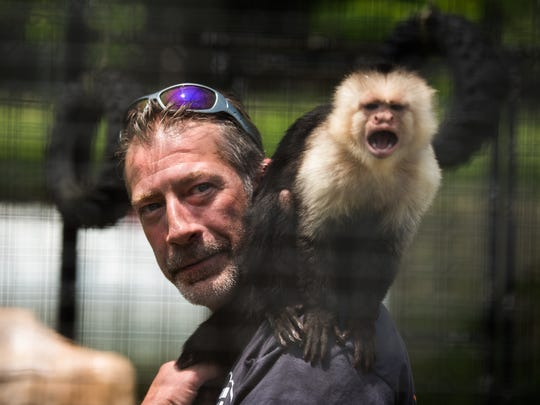 Jeff Sanders, a trained animal handler and volunteer at East Coast Exotic Animal rescue, lets Pia, a white-headed capuchin monkey about 15 years old, rest on his shoulder while feeding her inside her cage Saturday June 11, 2016 at East Coast Exotic Animal Rescue. The Fairfield area animal rescue has opened this year after being closed for two years due to damages from fires.