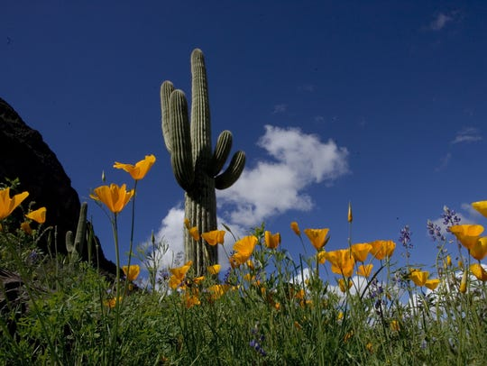 An annual pass to the Arizona State Park system makes for an excellent gift.