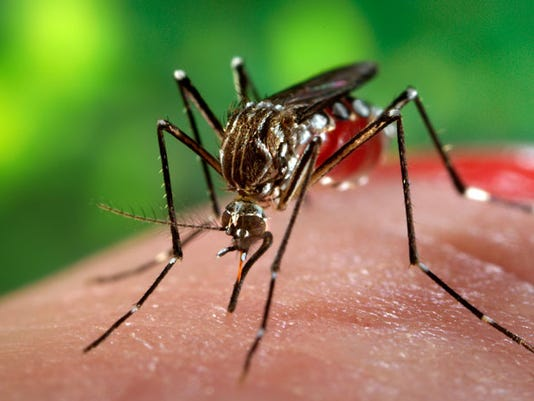 635967373069314998-TLHBrd-03-29-2016-Democrat-1-C002--2016-03-28-IMG-Zika-mosquito-1-1-UODSEE8G-L783832726-IMG-Zika-mosquito-1-1-UODSEE8G.jpg
