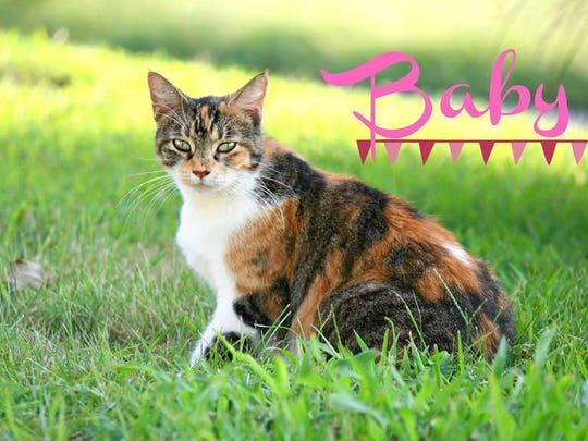 Baby is a wonderful cat that would absolutely love to find a home for the Holidays. She loves the attention of her people, she's a great mouser and would love a nice warm lap or window to lie in. She's waiting for her purrfect home at Mary Hall Ruddiman.