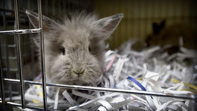 Who doesn't love a little ball of fur? York County SPCA's BunFest will be held 10 a.m. to 3 p.m. March 19.