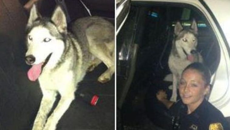 Winter was found by Tampa police and was placed in