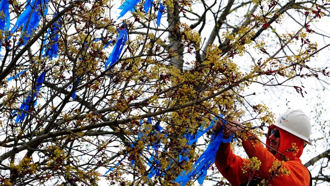 Portland General Electric employee Clint Vogel hangs blue ribbons from a tree outside the Capitol, on Wednesday, April 1, 2015. The ribbons symbolize the 10,630 confirmed victims of child abuse in Oregon in 2013.