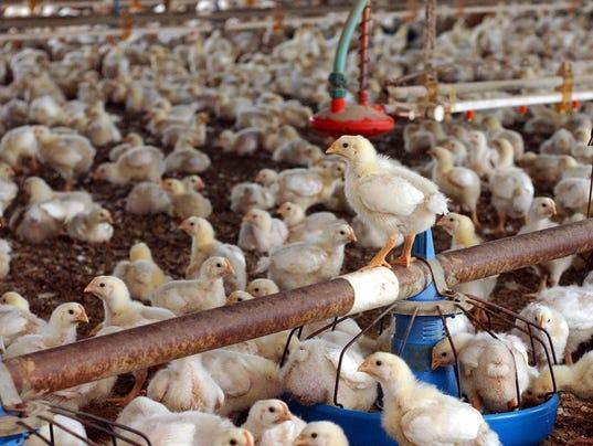 Chicken-House.jpg