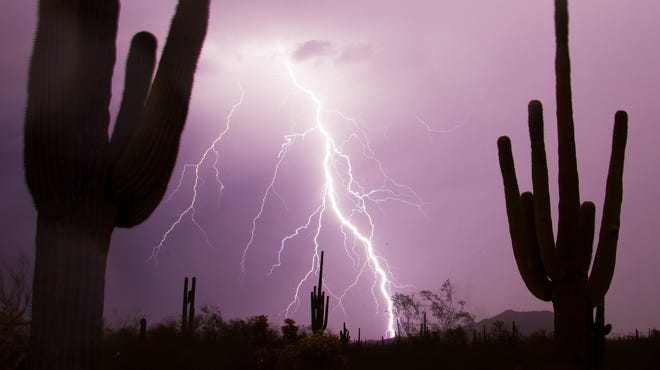 Lightning strikes over saguaros during a storm in east Mesa on July 26, 2014.