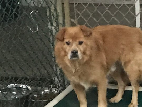 Kip is available for adoption from New Hope Animal