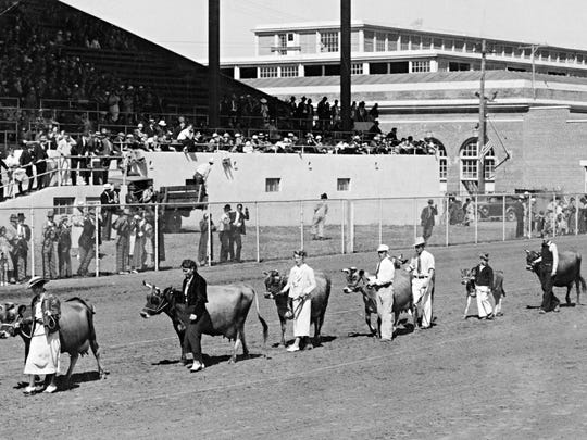 The traditional parade of livestock in front of the grandstands at the 1936 Oregon State Fair.