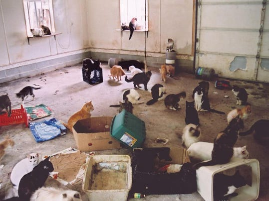 Cats In A Hoarder House