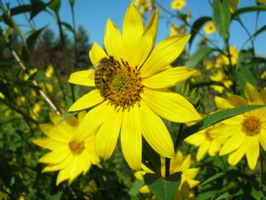 636408224551393377-Prairie-Flower.jpg