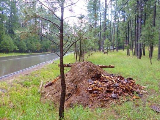 -slash-piles cedar creek
