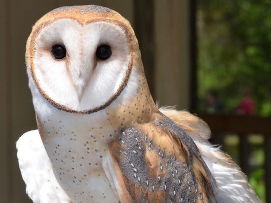 St. Francies Wildlifefest will feature owls and other wild creatures.