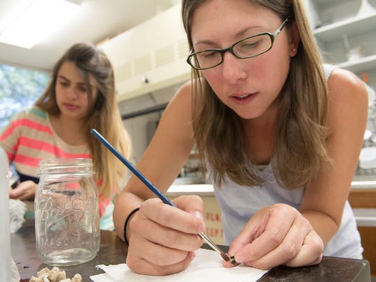 MSU research associate Casey Delphia, right, and Paloma Amaral, an exchange student from Brazil, prepare bee specimens for examination and identiification.