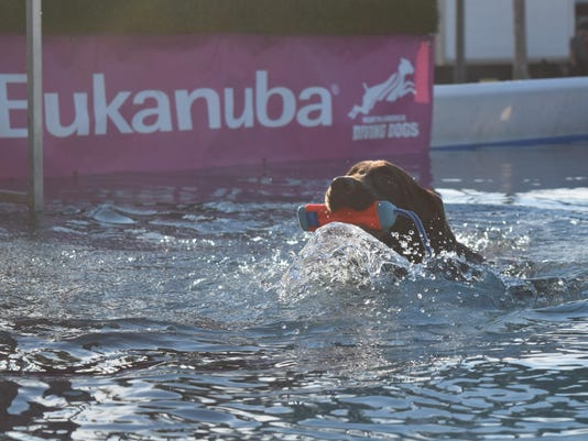 Orlando dog show largest in North America