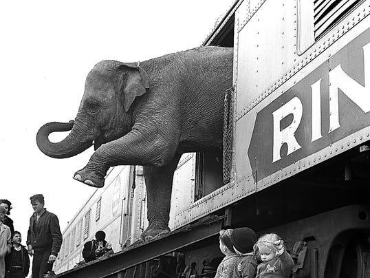 Elephants in circus