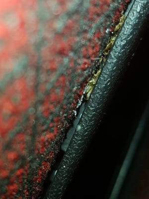 Bedbugs were found in the seats at the AMC Westgate 20 theater in Glendale.