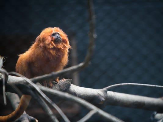 News: Brandywine Zoo Expands