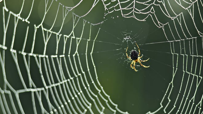 Close-up of a spider on a web