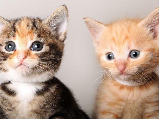 kitten-stomping-death-livingston-county.jpg