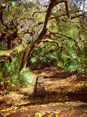 Coconut Point Preserve in Melbourne Beach offers a gorgeous 3/4 mile trail leading hikers and trial runners from the ocean to the river and back again.