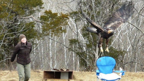 Kate Slankard released the Bernheim Forest golden eagle in 2015.
