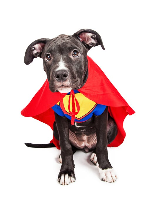 Superhero dog.jpg