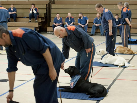 Inmates at the G. Robert Cotton Correctional Facility in Jackson, Mich., do training with puppies from the Leader Dogs for the Blind program in a gymnasium at the prison on Wednesday, May 17, 2016.
