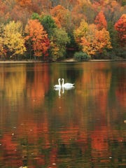 Two swans on the lower lake in the Ramapo County Reservation