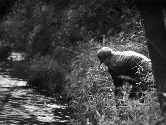 A volunteer searcher looks through brush along Walnut