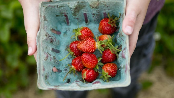 Cyler Schill, 6, shows off the strawberries that he picked Thursday at Altenburg's Country Gardens in Wisconsin Rapids.