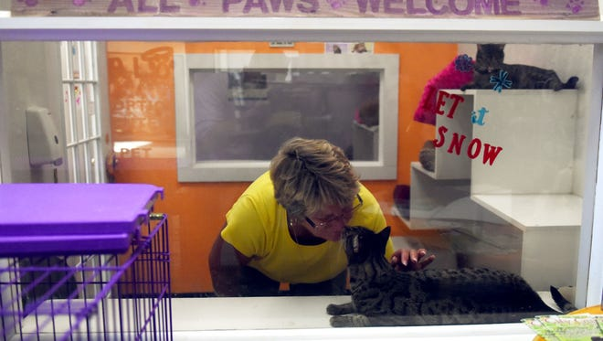"Chada Lanseer, a volunteer at H.A.L.O. No-kill Rescue at Indian River Mall, cares for the 25 cats and rabbits Wednesday, Dec. 6, 2017, as the store prepares to open for the day. The City of Vero Beach was prepared to cut the electricity to the mall for nonpayment sending store owners scrambling. ""I can tell you I didn't sleep much,"" said Desiree Kroeger, a volunteer at the rescue. ""I had that anxiety in my mind about if we don't have any power what's that going to mean for the animals. I know that the shelter is already pretty full and I didn't know where else we were going to be able to take them."""