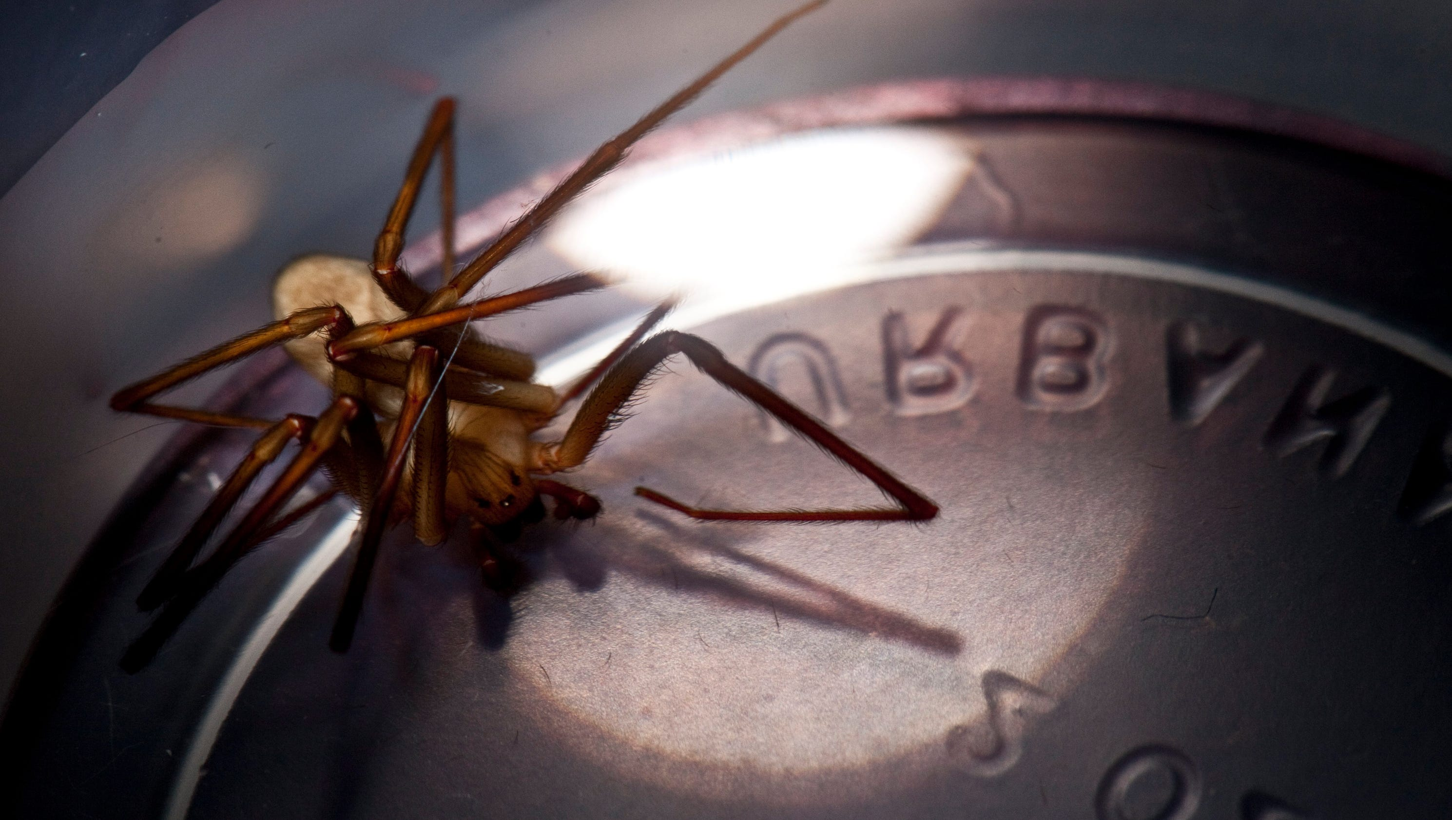 recluse chat There are a number of things to look out for when you are checking for signs of a brown recluse spider bite all of our chat agents are busy helping other.