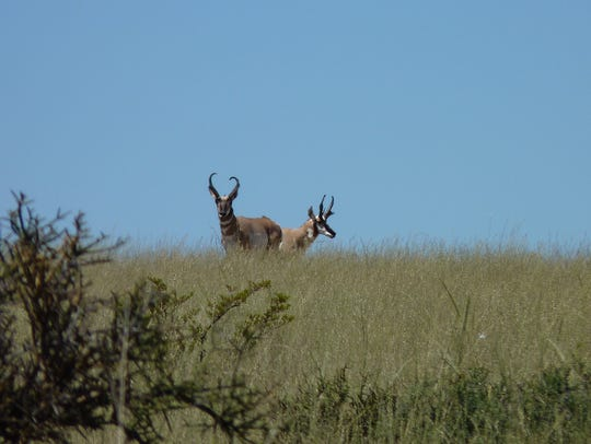 Healthy rangelands are critical to wildlife throughout