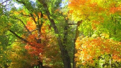 The forest around Ruidoso is full of color.