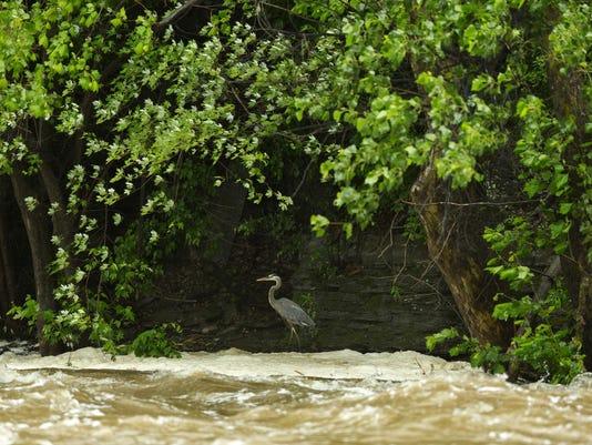 20150609_Rain_Ithaca_Falls_sw