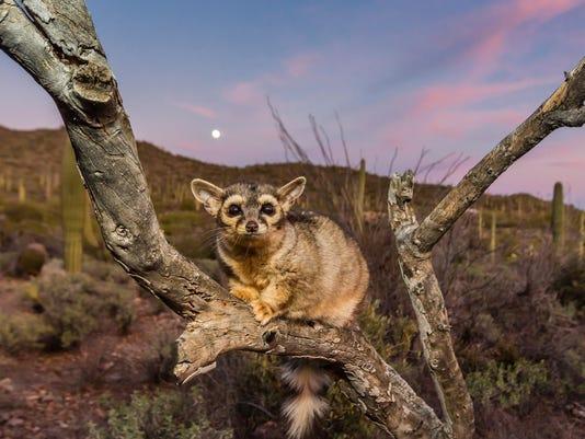 Full Moon Tucson