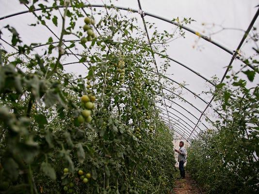 Dunhams' greenhouse