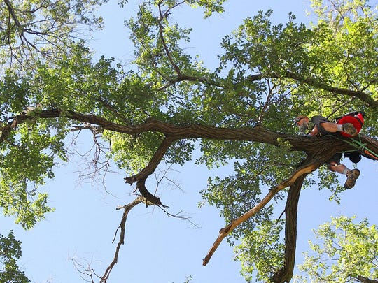 Duane Hook inches across a limb towards Necco, a calico one-year-old cat which spent a day and a night atop of a 60-foot tree on Monday. Hook and his wife Angie Shyrigh operate Cat In A Tree Rescue service out of Columbus.