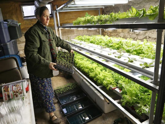 Becky Brubaker moves a tray of big beef tomato seedlings Monday, February 1, 2016, at the Weathered Plow in rural Carroll County. The tomato plants were started from seed at the end of December and grown hydroponically. The seedlings will be transferred to a greenhouse midway through February.